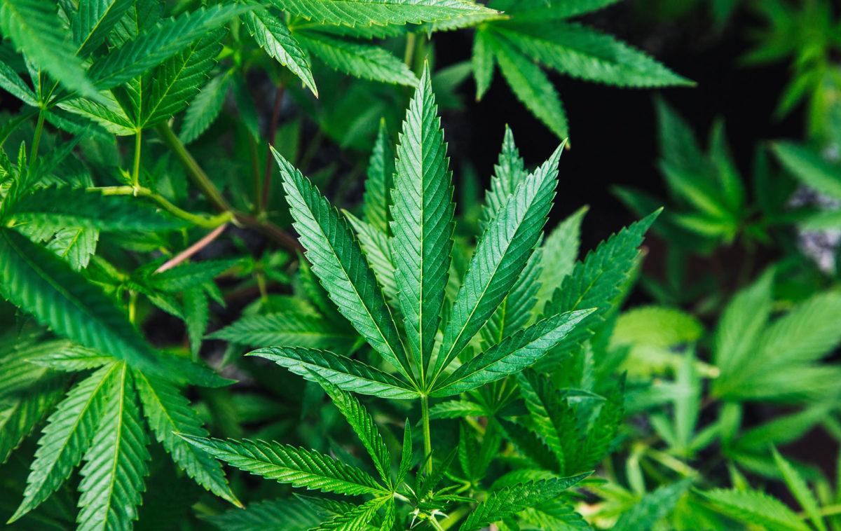 Legalizing Recreational Marijuana Use by Adults Gains Momentum